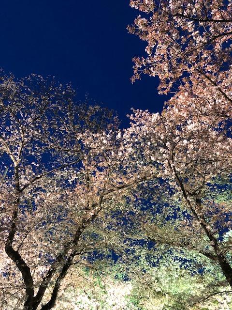 夜桜オフ会~2018年3月31日