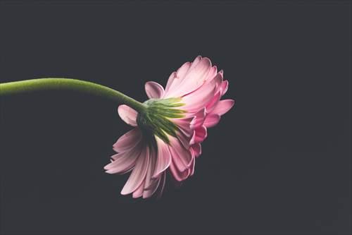 独身者イメージ-花