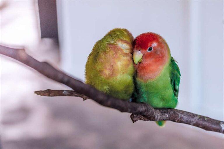離婚後の恋のイメージ